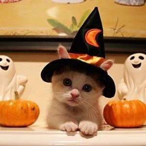 spooky_kitten